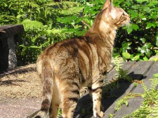 zralá venkovní kočička