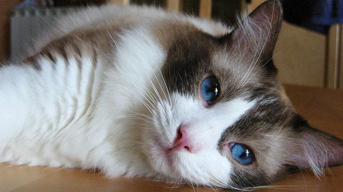 amatérské ghetto kočička