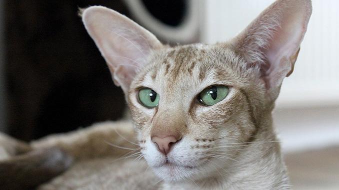 Obrázky tlustá kočička